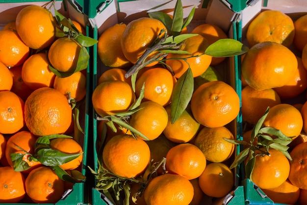 Oranje mandarijnvruchten in oogst op een rij manden Premium Foto