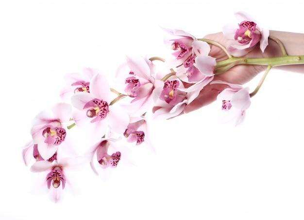 Orchidee op witte achtergrond Gratis Foto