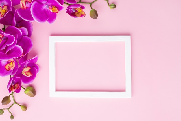 Orchideebloemen op een roze exemplaar ruimteachtergrond Gratis Foto
