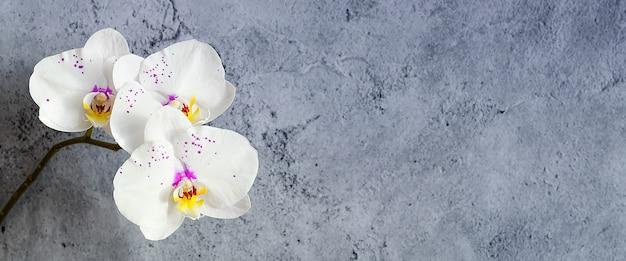 Orchideebloemen op een tak tegen een gepleisterde muur, mockup Premium Foto