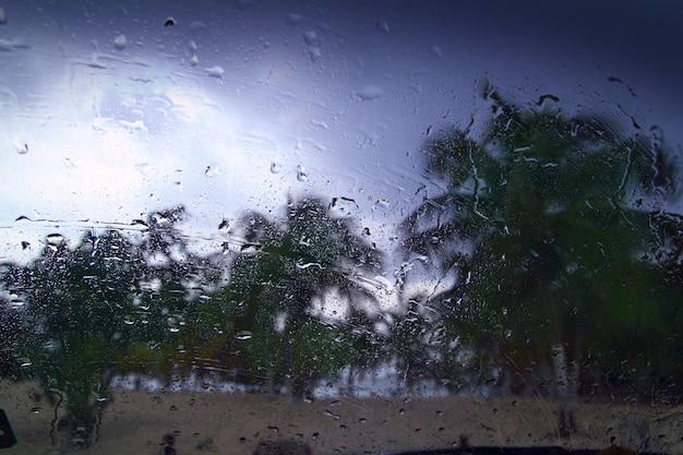 Orkaan tropische storm palmbomen van binnenuit auto Premium Foto