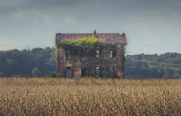 Oud verlaten gebouw overwoekerd door lange wijnstokken in het midden van een veld Gratis Foto