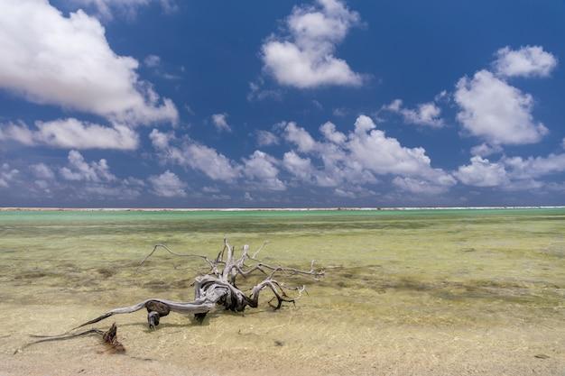 Oude boomtak links op het strand in zoutpannen. bonaire, caraïben Gratis Foto