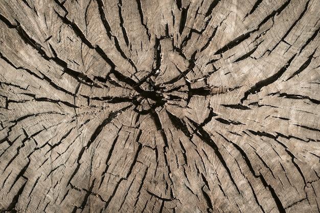 Oude houtstructuur Premium Foto