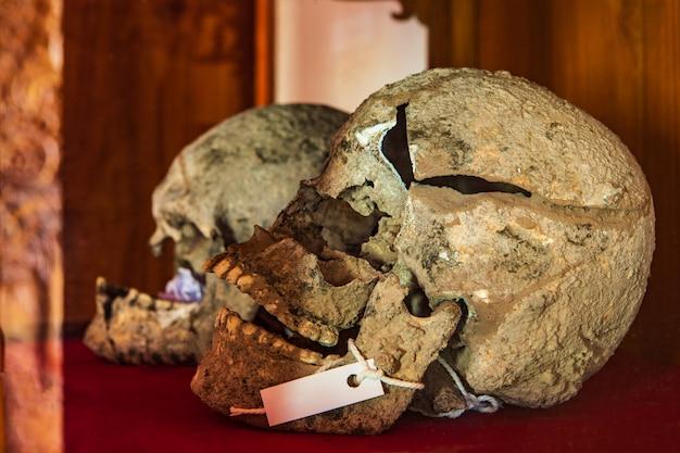 Oude menselijke skeletten gevonden in thailand. Premium Foto