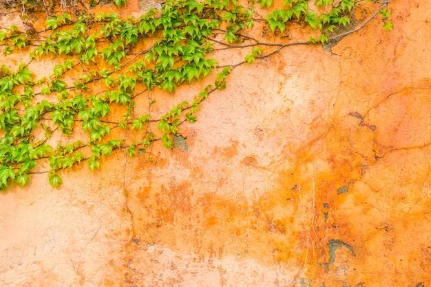 Oude stenen muur met bladeren. Gratis Foto