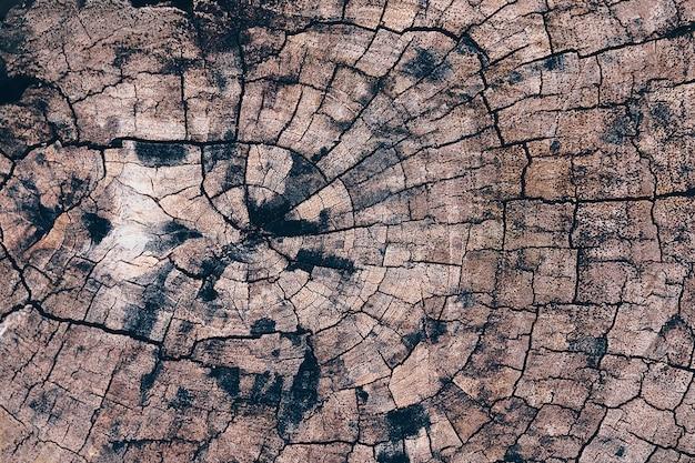 Oude van de de textuur backgroud houten aard van de boomstomp de lijstbovenkant Premium Foto
