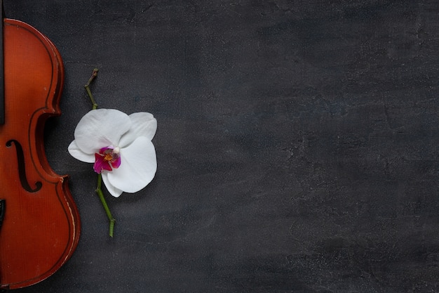 Oude viool en witte orchideebloem. hoogste mening, close-up op donkere concrete achtergrond Premium Foto