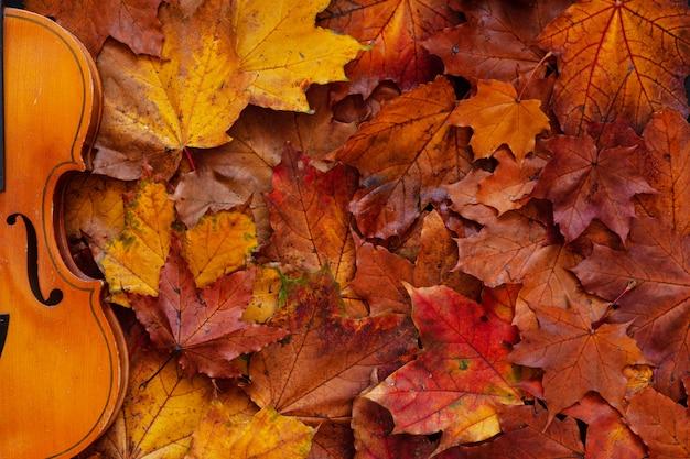Oude viool op gele de herfstachtergrond van esdoornbladeren. Premium Foto