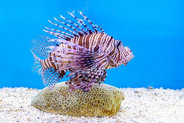 Over zeevis en zoetwatervis in aquarium Premium Foto