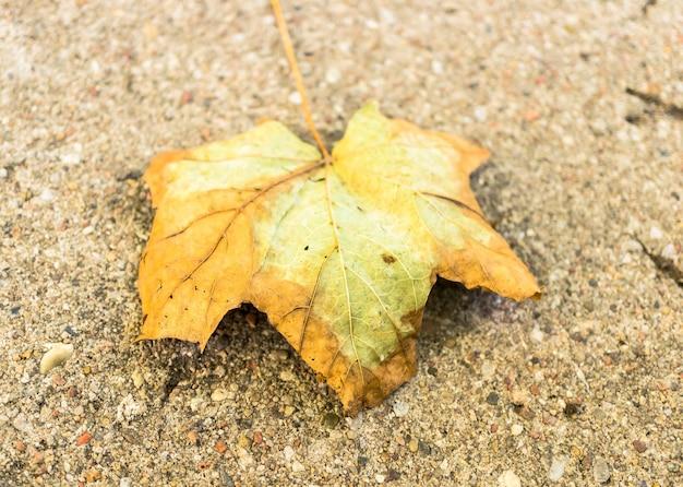 Overhead schot van een droog blad op de grond Gratis Foto