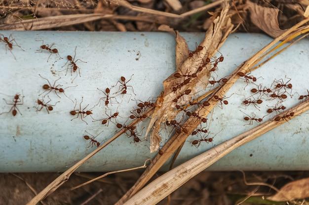 Overhead schot van rode mieren op de stalen blauwe buis genomen naast doi tao lake, thailand, azië Gratis Foto