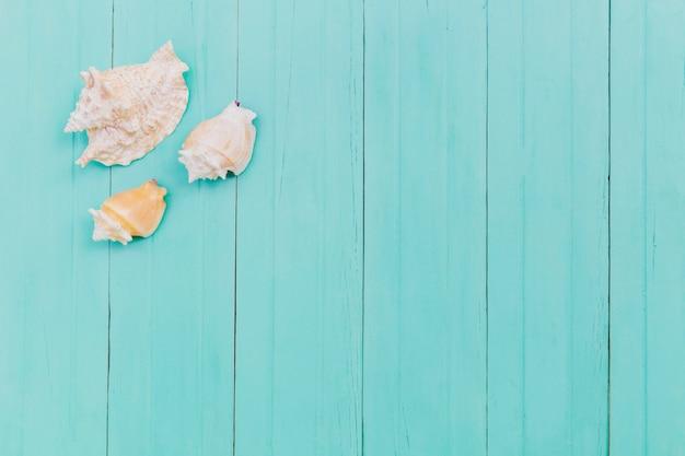 Paar witte zeeschelpen op blauw Gratis Foto