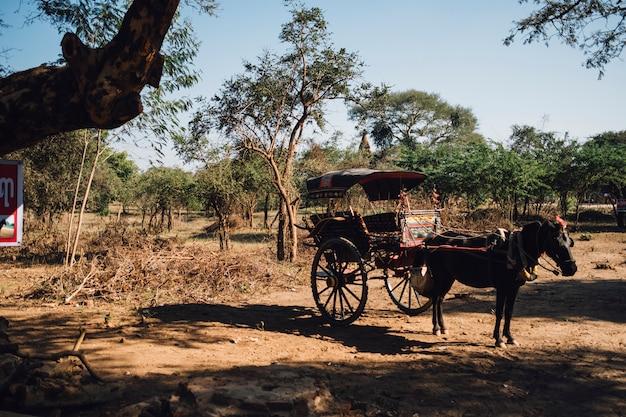 Paard en wagen voor reizen Gratis Foto