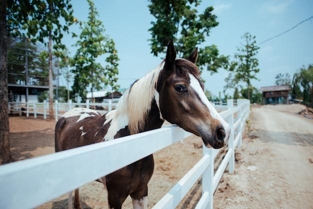 Paard op paardenboerderij Gratis Foto