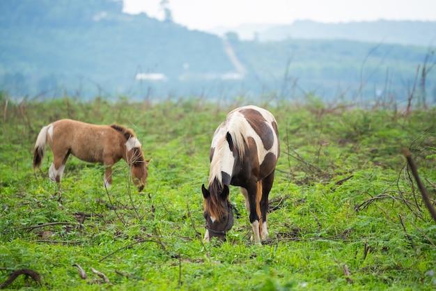 Paarden staande op het grasveld Premium Foto