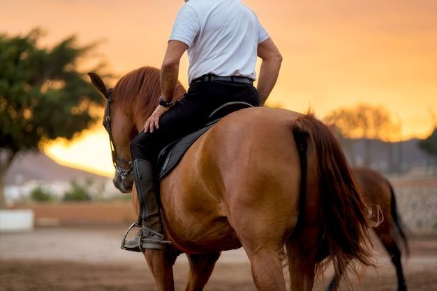 Paardentraining tijdens toneelzonsondergang Premium Foto