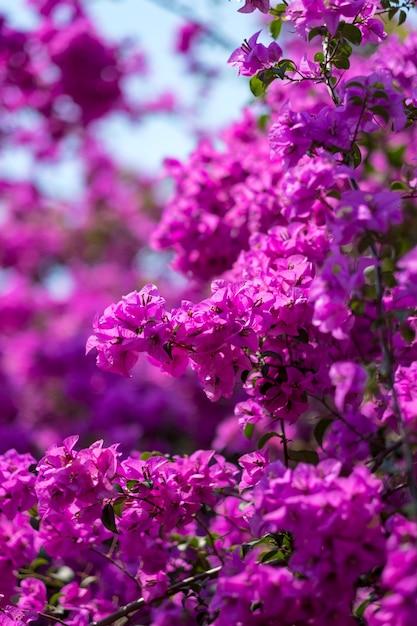 Paarse bloem Gratis Foto