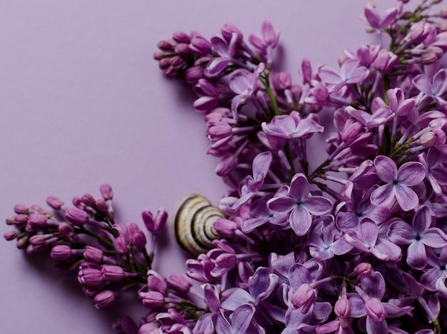 Paarse lila tak op violet Premium Foto