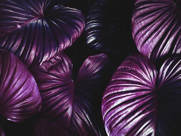 Paarse plant Gratis Foto