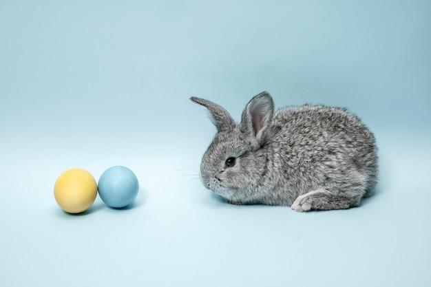 Paashaaskonijn met beschilderde eieren op blauw Gratis Foto