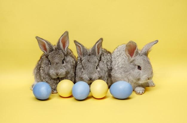 Paashaaskonijnen met beschilderde eieren op geel Gratis Foto
