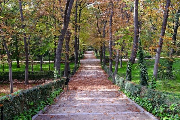Pad bedekt met gevallen bladeren in het retiro-park in madrid Premium Foto