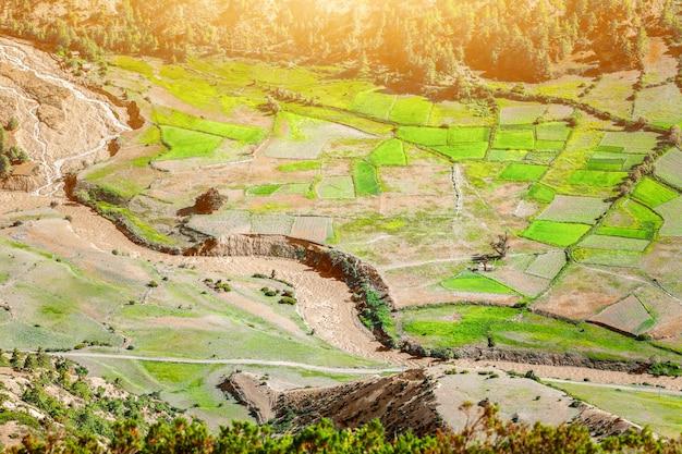Padievelden in nepal. natuur concept Premium Foto