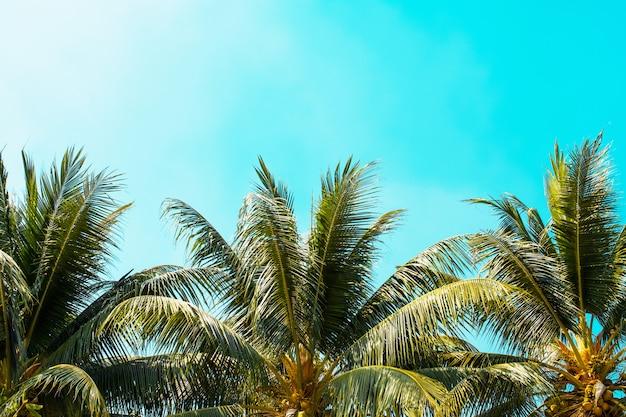 Palm op blauwe hemel met zonneschijnachtergrond Premium Foto