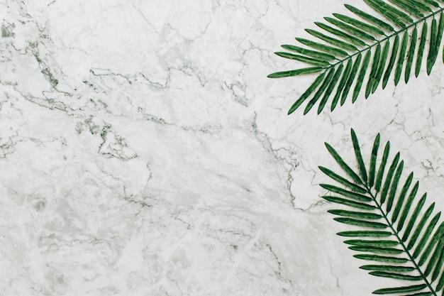 Palm over marmeren textuurachtergrond Gratis Foto