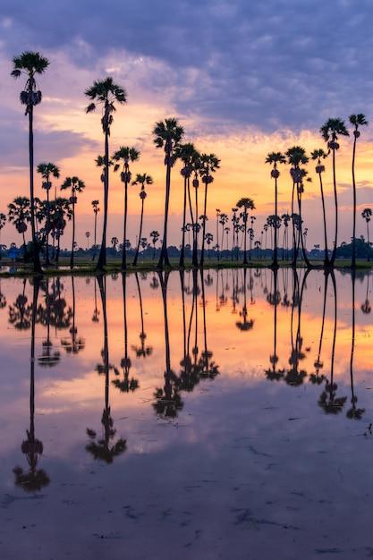 Palm tijdens zonsopgangtijd Premium Foto