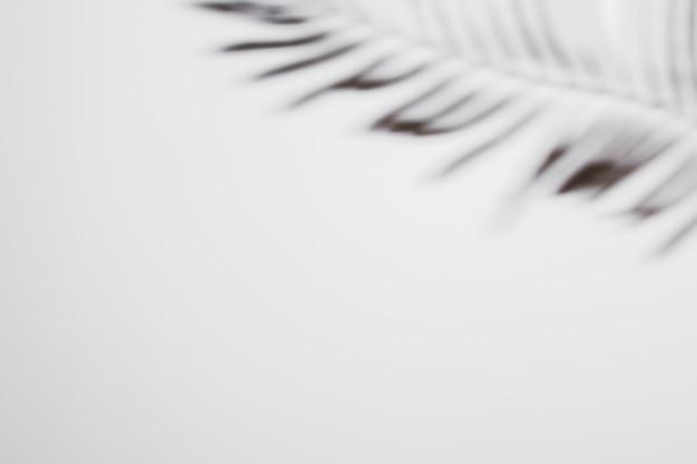 Palmblad met schaduw op witte achtergrond Gratis Foto