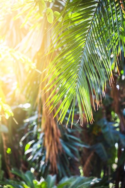 Palmblad op zonnige dag Gratis Foto