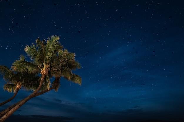 Palmbomen behang Gratis Foto