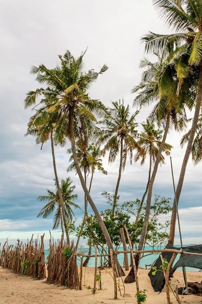 Palmbomen op het strand in de maldiven. donkere, bewolkte en dreigende lucht. Premium Foto