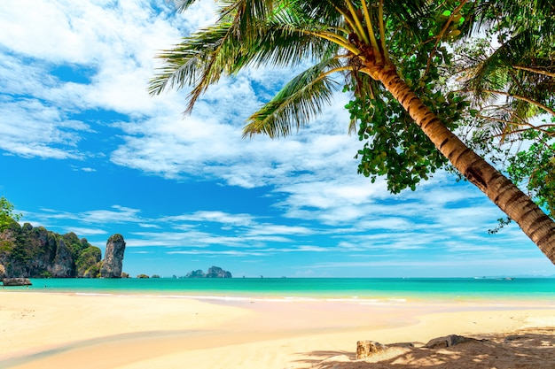 Palmbomen op tropisch strand Premium Foto