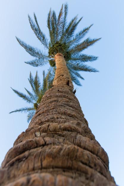 Palmbomen Gratis Foto