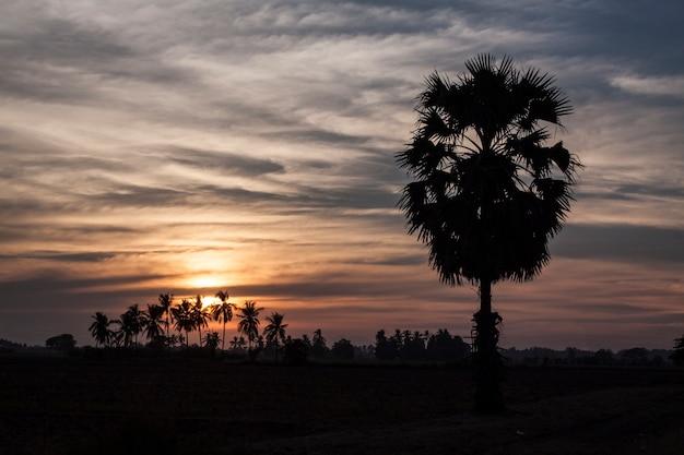 Palmenzonsondergang in phitsanulok thailand. Premium Foto