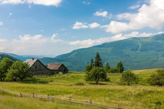 Panorama van karpatische bergen in de zomer met eenzame pijnboomboom vooraan en gezwollen wolken en bergranden. Premium Foto