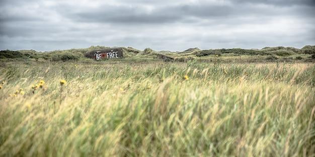 Panorama van tarwe aar groeien in het midden van een veld onder de bewolkte hemel op het platteland Gratis Foto