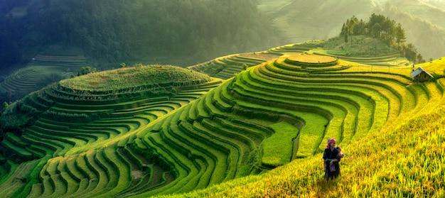 Panoramasymbool van vietnamese rijstterrassen, mu cang chai. yenbai, vietnam. Premium Foto
