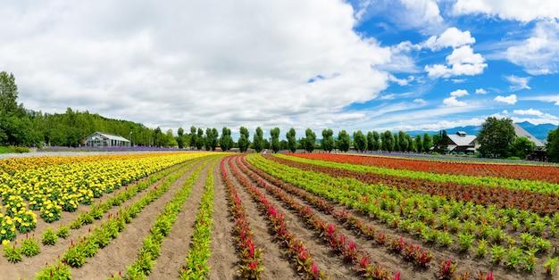 Panoramisch kleurrijk bloemgebied en blauwe hemel in furano, hokkaido, japan. Premium Foto