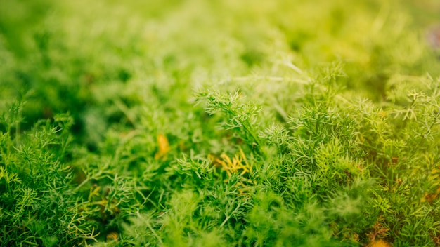 Panoramisch zicht op groene planten Gratis Foto