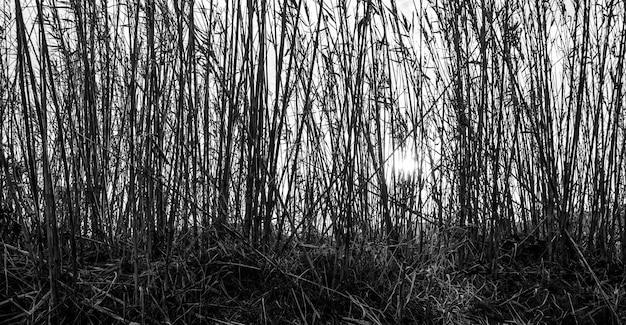 Panoramische opname in grijstinten van hoge takken van planten Gratis Foto