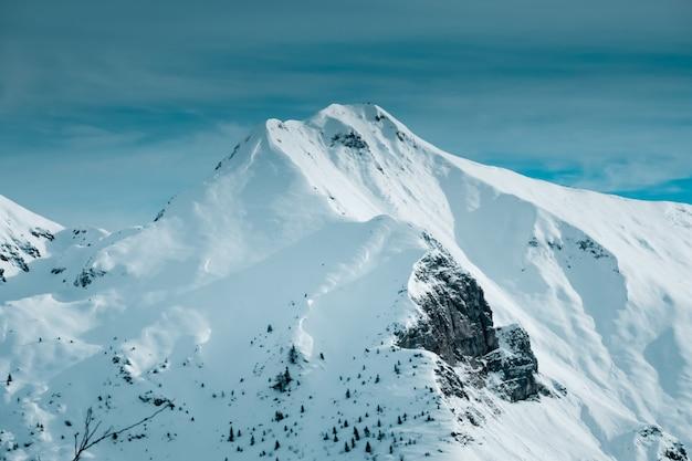 Panoramische opname van met sneeuw bedekte bergtop met een paar alpiene bomen aan de voet van de berg Gratis Foto