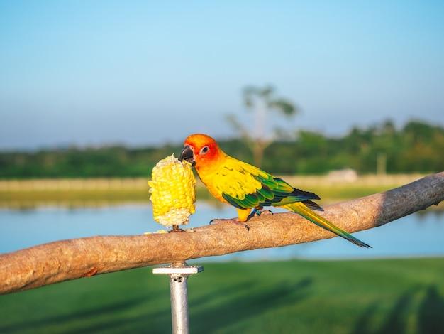 Papegaai is een schattig exotisch huisdier Premium Foto