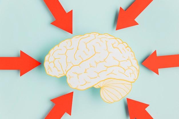 Papier hersenen met pijlen Gratis Foto