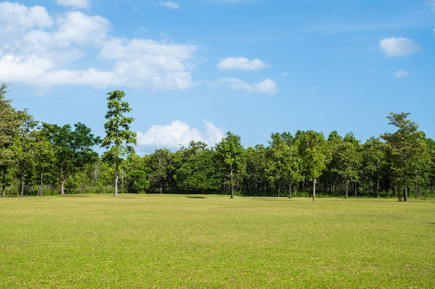 Park met groen grasveld Premium Foto