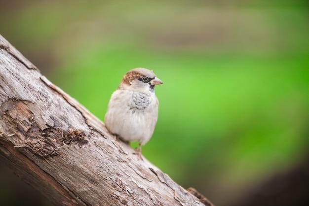 Park vogel ornithologie aviaire mussen Gratis Foto