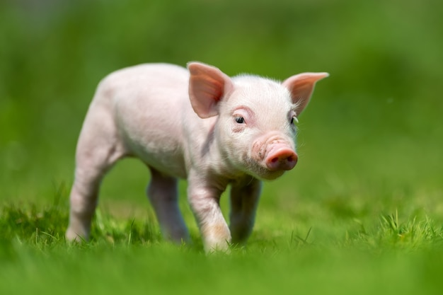 Pasgeboren big op de lente groen gras Gratis Foto